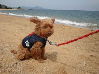 厚浜海岸2.jpg