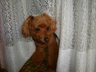 Ginger0918.jpg
