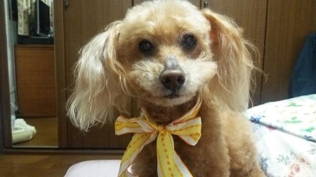 Ginger14歳1.jpg