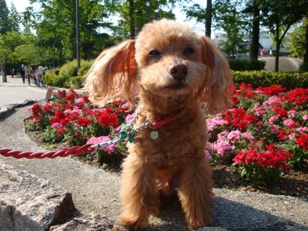 Ginger@長居公園1.jpg