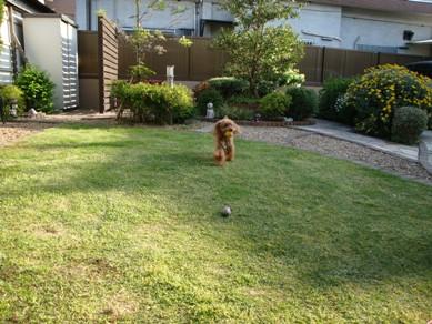 ボール遊び2.jpg