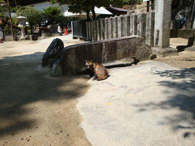 宮島のたぬき.jpg