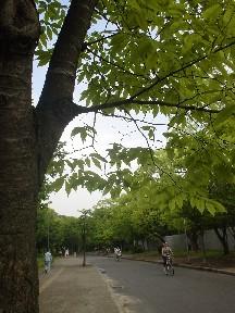 雨上がりの公園.jpg