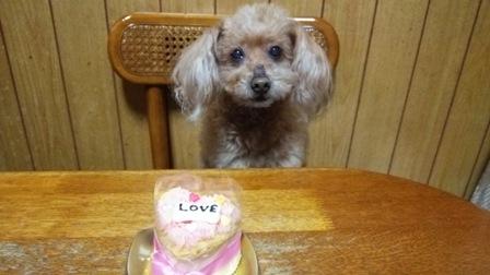 Ginger15歳誕生日2.jpg