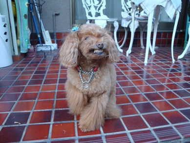Ginger2.jpg